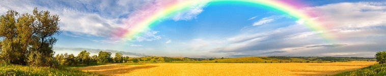 Panorama of a big summer field