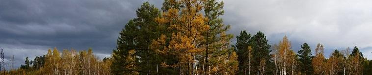 осень лес