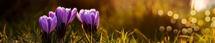 весна слайдер 2