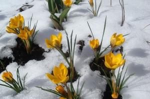 весна опережает календарь