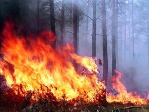 пожары лесные