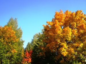 Осень - рыжая подруга
