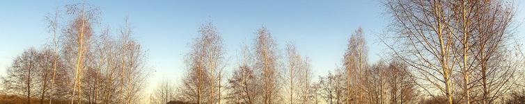 весна деревья
