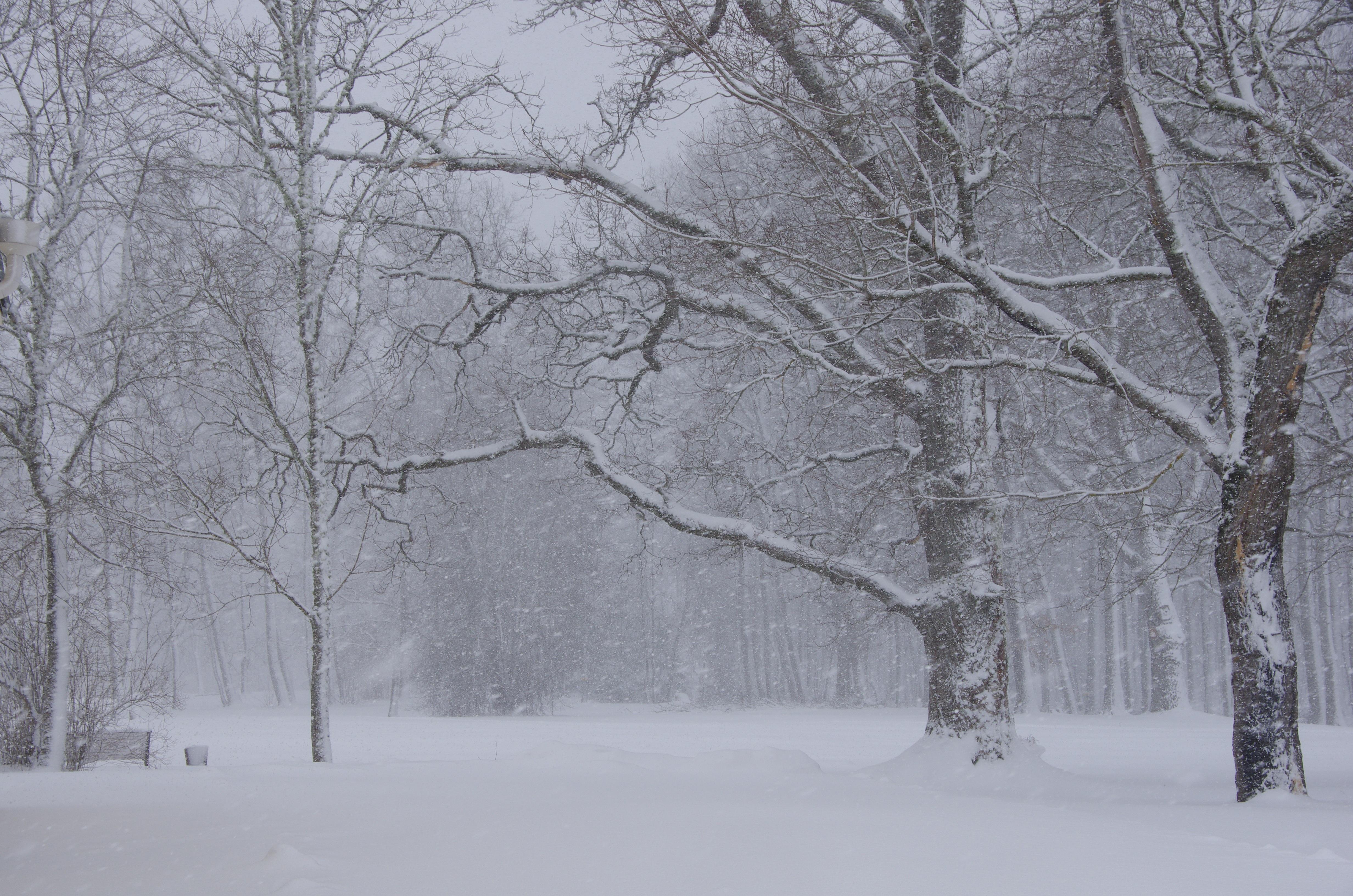 tree-nature-branch-snow-winter-frost-park-weather-season-snowing-blizzard-estonia-freezing-atmospheric-phenomenon-winter-storm-rain-and-snow-mixed-739021